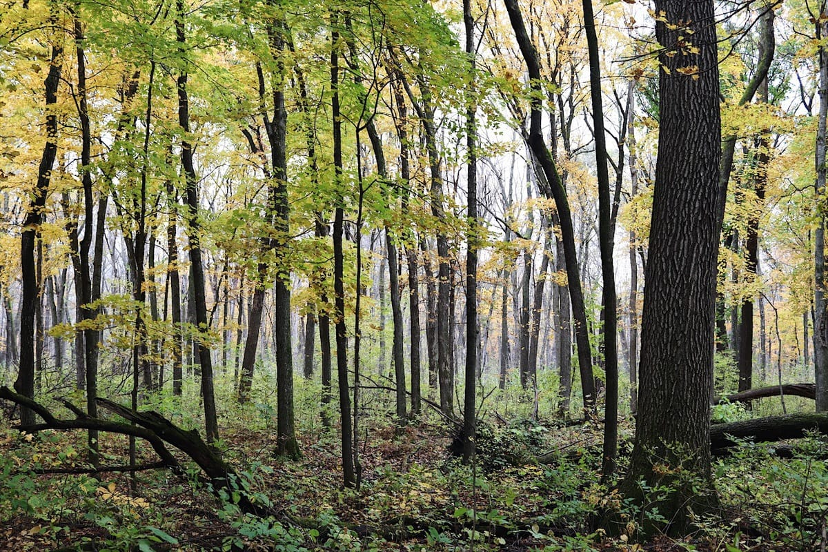 Trees at Nerstrand-Big Woods State Park