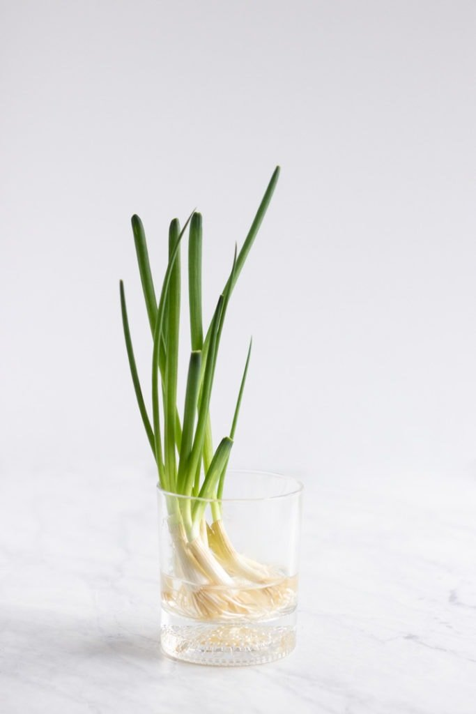 A glass with re-grown green onions.
